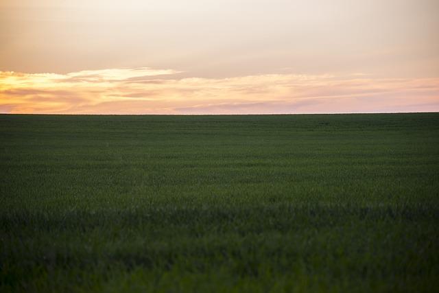 field-802123_640-1.jpg