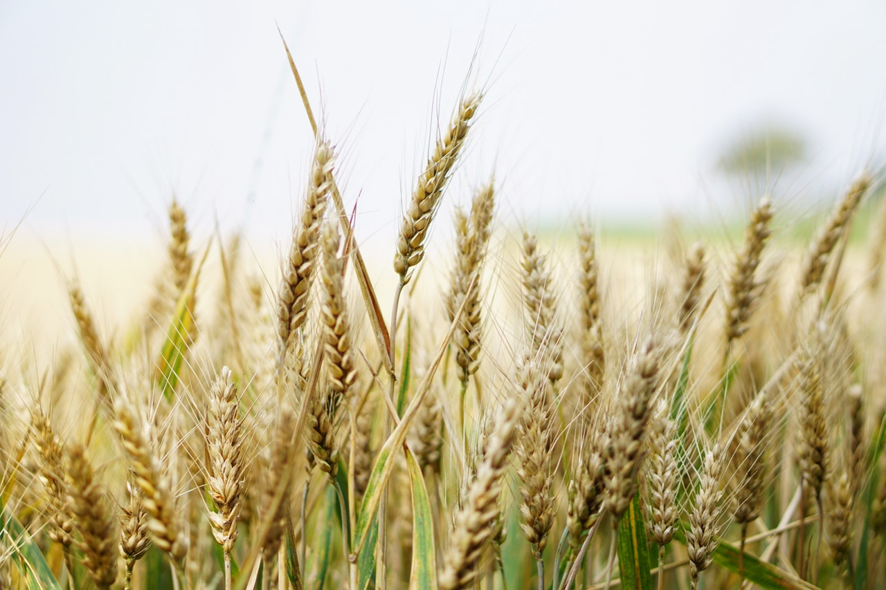 Rail Industry Benefits from Grain Boom