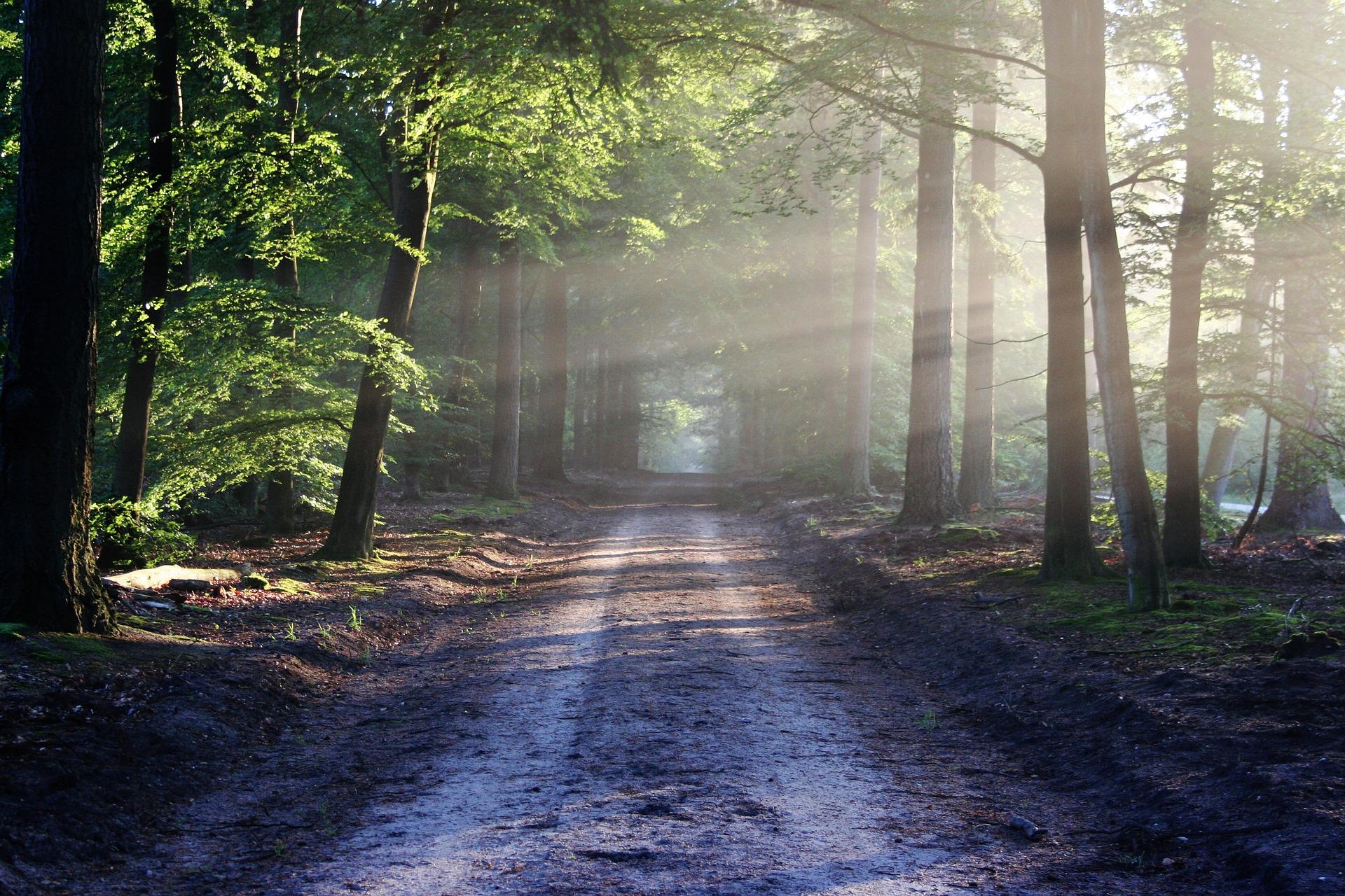 road-trees.jpg